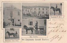 A5474) REGGIO EMILIA, REGIO DEPOSITO CAVALLI STALLONI. VIAGGIATA.