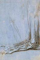 Leonardo Da Vinci The Anatomy Of A Bears Foot Poster 12x18 inch