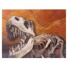 Dinosaurier Skelett 3D Bild