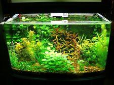 100 Semi oltre tanti tipi di piante per acquario,