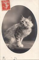 B81379   cat chat front/back image