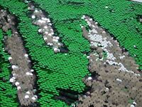 Fabric Backed Reversible Sequin Fabric (Mermaid) : Green/Silver