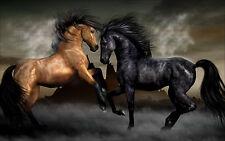 "Poster 24"" x 36"" Black Brown Horses"