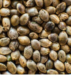 Whole Hemp Seeds ~ Nuts ~ Free Shipping