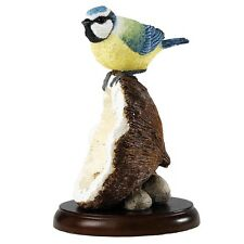 Border Fine Arts Studio - Birds - Blue Tit on Coconut Shell A26892 New