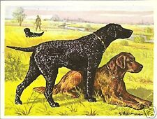 1952 Dog Print Austria Tobacco Company Bildwerk Golden & Curly Coated Retriever