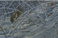 """Robert Bateman - """"In the Briarpatch - Cottontail Rabbit"""" limited edition print"""