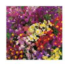 LINARIA 'Fairy bouquet' 500 seeds flower garden