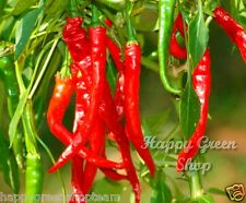 HOT CHILLI PEPPER CAYENNE Red Capsicum Annuum approx.125 SEEDS - vegetable