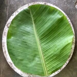 Disposable banana leaf serving plates, 100% natural eco friendly serveware set