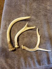 New Listing3Antlers Whitetail Deer Shed Horn~Knife~Decor~Mount~Tr ophy~Shed~wedding~Lot