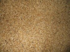 5 lbs OAT seed - Fresh Seed - Deer Turkey Food Plot - Wildlife Food