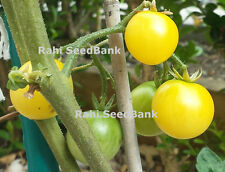 Italian Ice Tomato - One of the Sweetest, Non Acidic Cherry Tomato - 10 Seeds