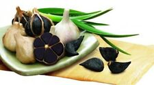 100pcs Black Garlic Seeds Rare Organic Natural Vegetables Heirloom Big Harvest