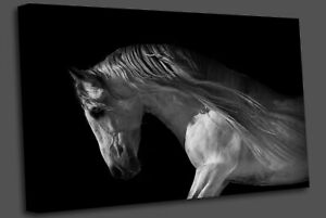 horse portrait on a dark background Wall Art Picture Print