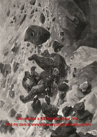 Bear Grizzly Kodiak Caught in Avalanche Falling, Large 1890s Antique Print