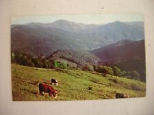 VINTAGE PHOTO POSTCARD OF CATTLE GRAZING IN MOUNTANOUS AREA OF EASTERN TENNESSEE