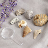 Rock & Mineral Collection PK664 Geology Real Specimens Kit with Magnifier