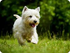 Mauspad aus der Edition Colibri: West Highland White Terrier - schöner Hund