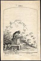 Antique Master Print-BRAT-MONKEY-LONG TAIL-STONE-Rotingus-Ridinger-ca. 1740