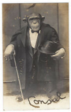 CHIMPANZEE Consul, in Top Hat and Tails with Cane, RP Postcard Unused