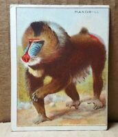 T29 Hassan Cigarettes Mandrill Card (B-3)