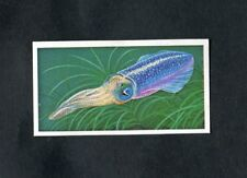Brooke Bond Tea Card: 1986: Incredible Creatures, No.19 Luminous Squid