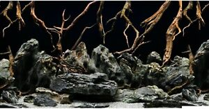 "19"" Tall Height New Aquarium / Vivarium Background Poster Komodo Viv"