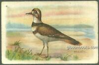 Victorian Trade Card for Arm and Hammer Useful Birds The Killdeer Plover