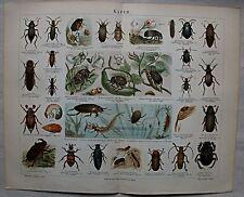 Originaldrucke (1800-1899) aus Europa mit Zoologie-Motiv