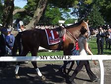 PALACE MALICE 8 by 10 PHOTO 2014 THE METROPOLITAN Horse Race BELMONT PARK #5