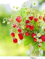 Wild Strawberry Regina  - Fragaria vesca - 320 seeds