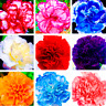 100 PCS Seeds Rare Perennial Flowers Carnation Plants Bonsai Home Garden 2021 D
