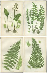 Lot of 4 Original Antique Victorian PRATT Fern Prints Botanical 1862 - Lot 56