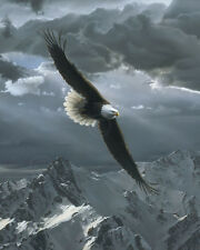 EAGLE ART PRINT - Sacred Heights (detail) by Daniel Smith 27x22 Wildlife Poster