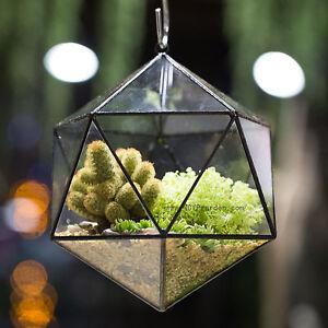Icosahedron Open Glass Geometric Terrarium Flower Pot Succulent Fern Planter