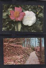 Vintage Postcard Lot AL- BELLINGRATH GARDENS Camellia Blooms & Winding Flagstone