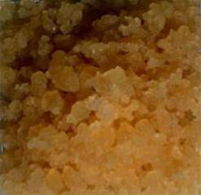 Tibicos Water Kefir Grains or Tibi - South American - Organic Grown Water Kefir