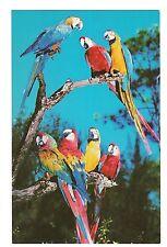 Macaws at Parrot Jungle Birds Miami Florida Postcard Fl Koppel Color Cards