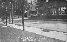 F19/ Muscatine Iowa Postcard 1915 Mullberry Avenue Homes