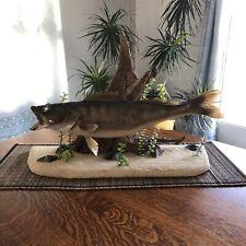 "Real Skin 25 1/2 "" Walleye Saugeye Pike Bass Fish Taxidermy Mount Trophy Decor!"