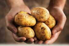 Potato REVENGE Seeds potatoes organic seeds Ukraine Seeds 0.02g