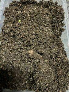 4LTR Aquatic Compost Soil Potting Garden Planting Pond fish/Tropical Fish**loose