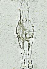 Art Study of the proportions of a horse  Leonardo da Vinci  Poster Print