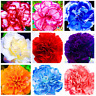 100 PCS Seeds Rare Perennial Flowers Carnation Plants Bonsai Home Garden 2019 N