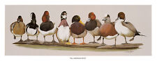 All American Boys Art La May Art Print Animals Birds Duck Poster
