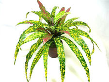 Artificial Silk Codiaeum Goldstar Plant in pot
