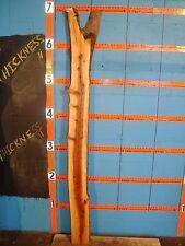 """#7726 wild apple live edge slab rustic wood lumber 81""""L 7""""W 1 13/16T"""