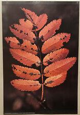 (PRL) RED LEAVES FOGLIE PIANTA VINTAGE AFFICHE PRINT ART POSTER COLLECTION