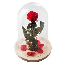 La rosa encantada de la Bella y la Bestia